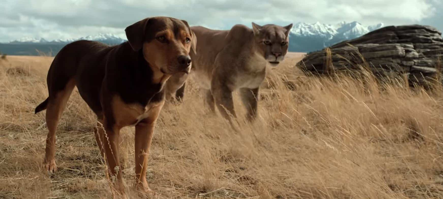 A Dog's Way Home Review